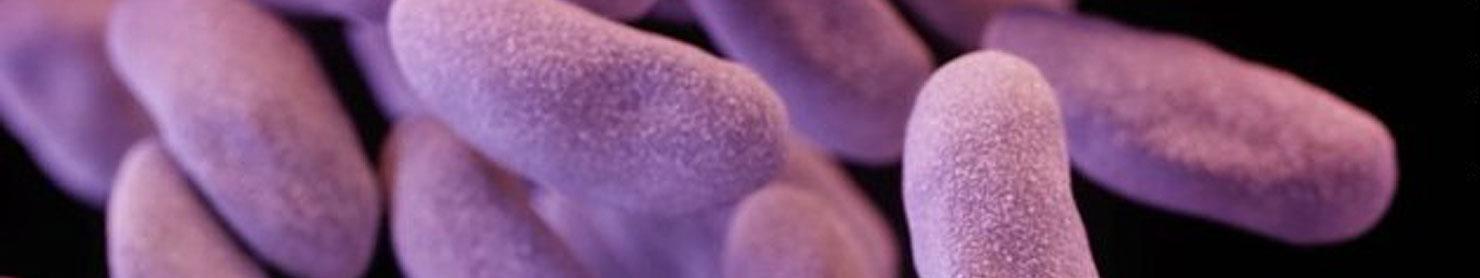 bacteria-21