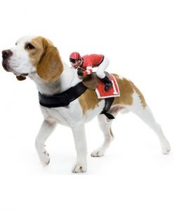 Dog and rider for Beverley Race Day