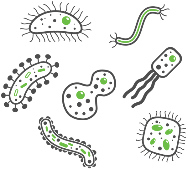 cartoon graphics of bacteria