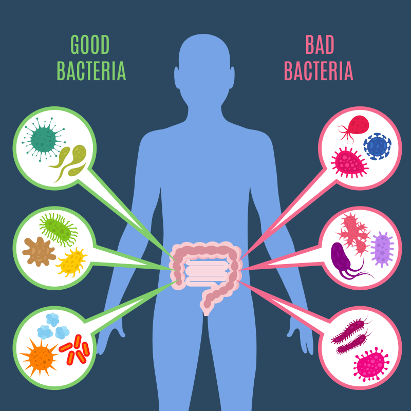 infographic showing good and bad gut bacteria