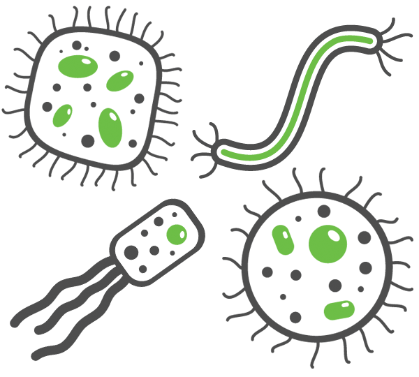 bacteria that cause respiratory infections
