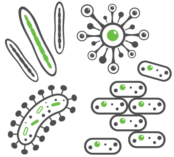 graphics of bacteria that cause common bacterial infections