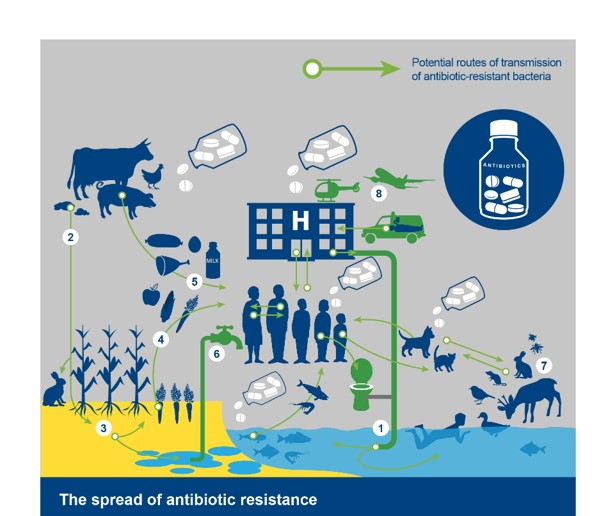 infographic of how antibiotic resistance is spread