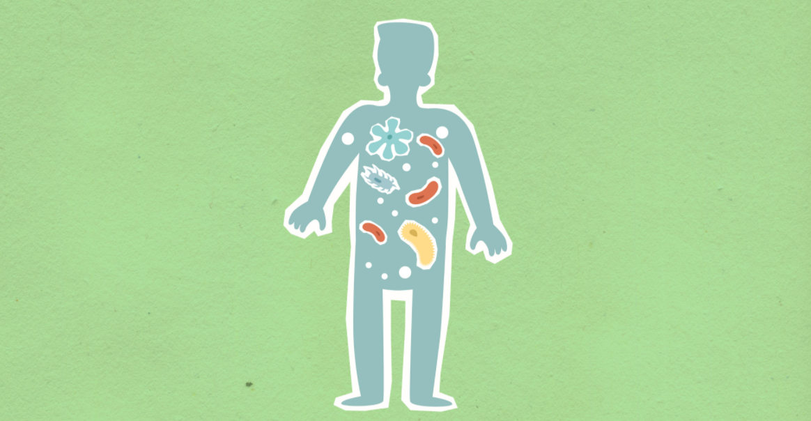 Illustration of gut bacteria in a human silhouette