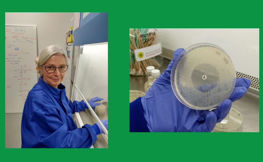 Antibiotic resistance breakers researcher Julie Tod and an agar plate